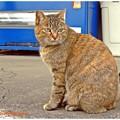 駅前の猫ちゃん