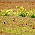 Photos: 春色の畑