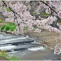 春の小川(2015)