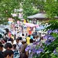 Photos: あじさい祭り