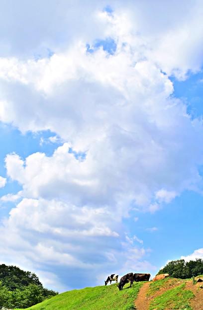 入道雲の下で