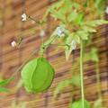 Photos: 緑の風船