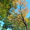 沿線の秋景色(4)