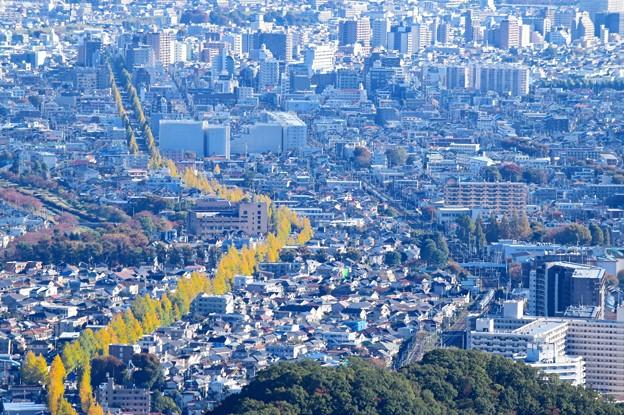 Photos: 黄葉中央線