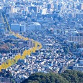 黄葉中央線