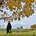 Photos: 晩秋の河川敷