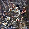 Photos: 立春に向けて