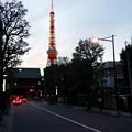 夕暮れタワー