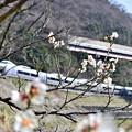 Photos: 梅あずさ