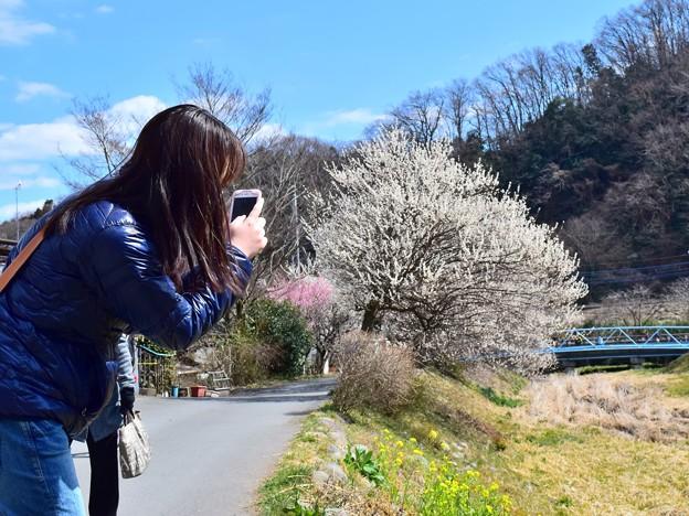 写真: 春のスマホガール