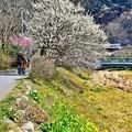 春色沿線7