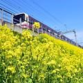 写真: 春色沿線8