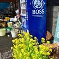写真: 春のBOSS