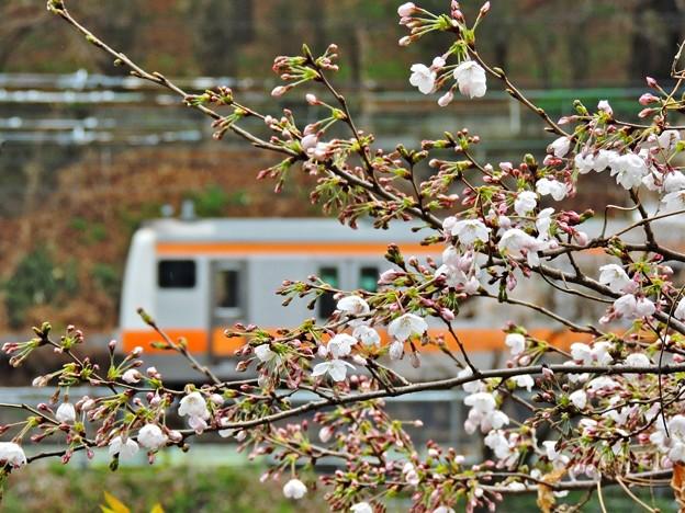 Photos: 春色沿線12