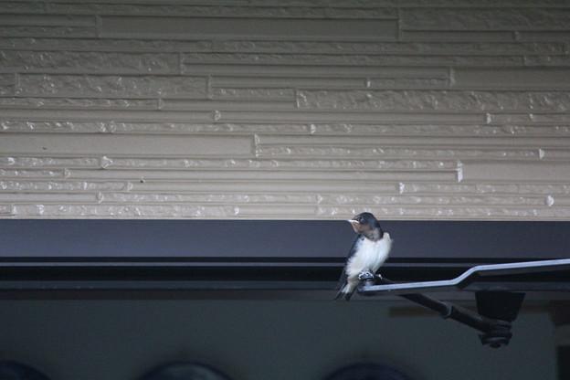 写真: 巣に戻りたいです