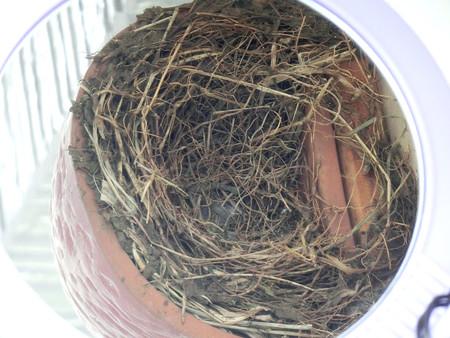 玄関外の巣