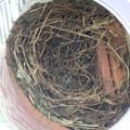 写真: 玄関外の巣