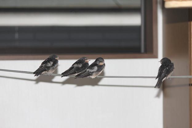 写真: みんな巣から出た
