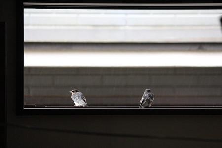 窓から外を