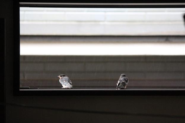 写真: 窓から外を