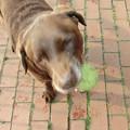 写真: 次はボールだよ!
