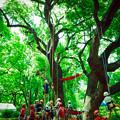写真: 木登り