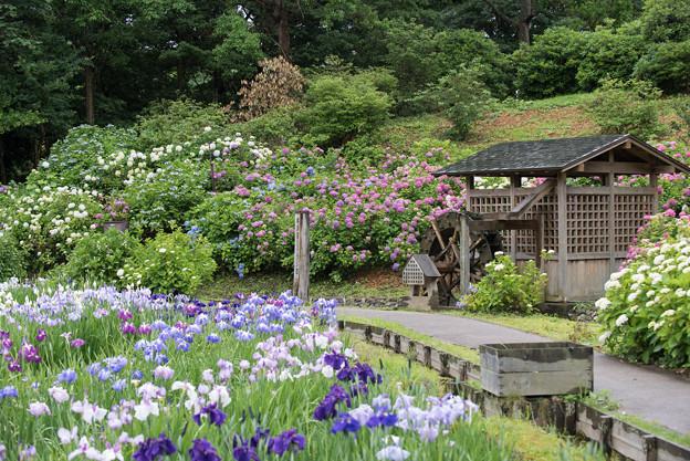 【横須賀しょうぶ園(眺め)】2