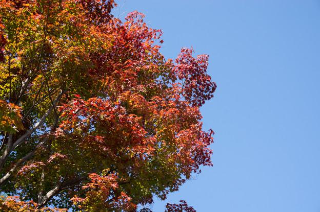 天龍寺~唯一の紅葉
