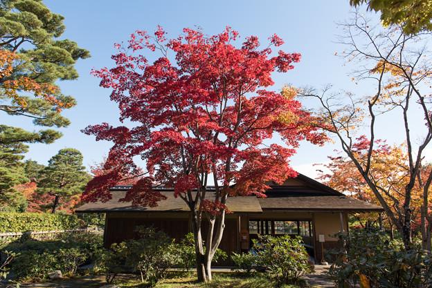 日本庭園の紅葉(1_2)清池軒