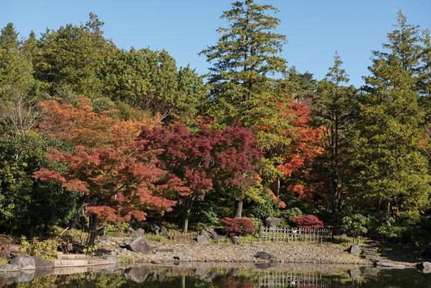 日本庭園の紅葉(1_4)