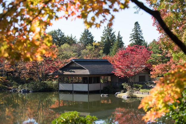 日本庭園の紅葉(2_1)清池軒