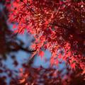 日本庭園の紅葉(3_3)