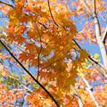 日本庭園の黄葉(5_1)