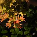 日本庭園の紅葉(6_5)