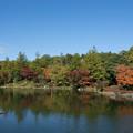 日本庭園の紅葉(7_1)