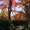 日本庭園の紅葉(7_4)