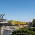 昭和記念公園~カナールのイチョウ(1)