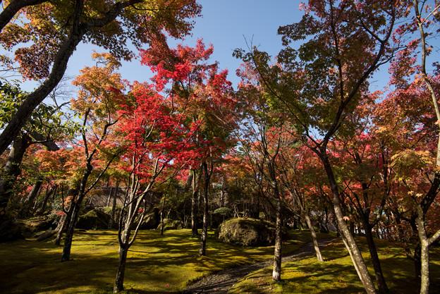 箱根美術館_庭園の様子2