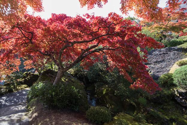 箱根美術館_庭園の様子4