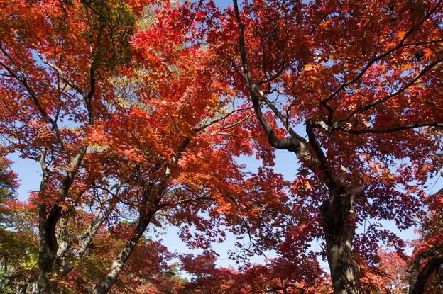 箱根美術館_庭園の様子5