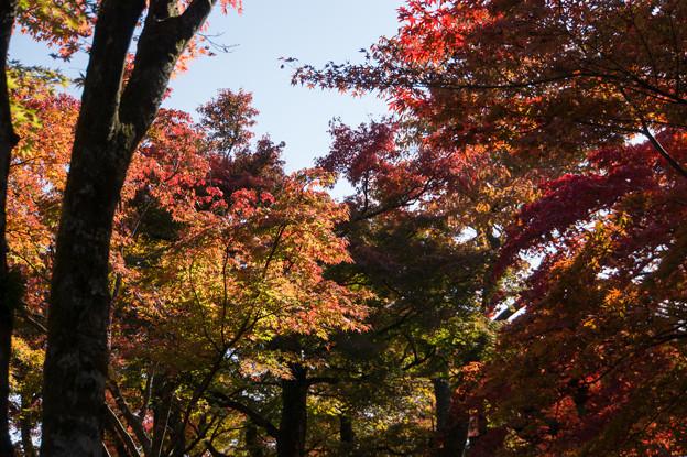 箱根美術館_庭園の紅葉