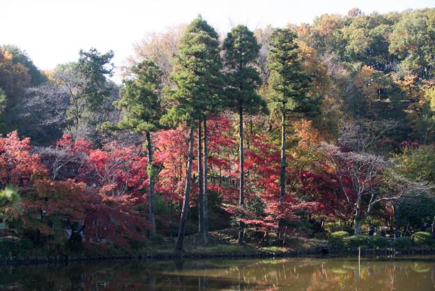 薬師池公園【モミジの真っ赤な場所】1