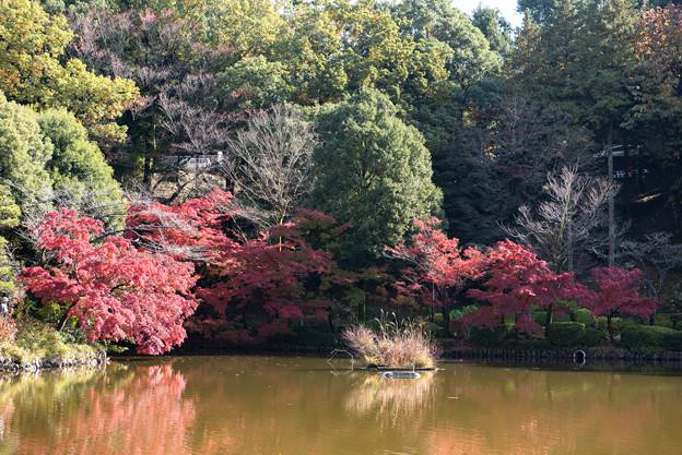 薬師池公園【薬師池の紅葉】1