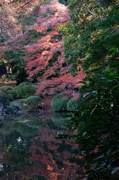 新宿御苑【下の池の眺め】4