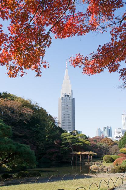 新宿御苑【日本庭園の紅葉】1