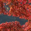 新宿御苑【日本庭園の紅葉】2