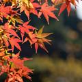 新宿御苑【日本庭園の紅葉】4