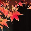 新宿御苑【日本庭園の紅葉】5
