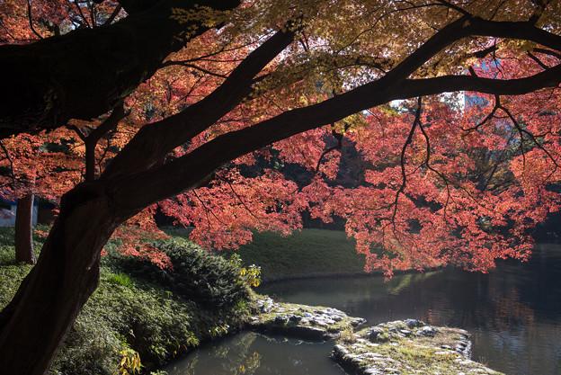 小石川後楽園【深山紅葉を楽しむ】1_2