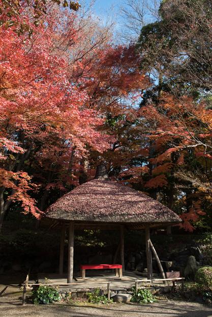 小石川後楽園【深山紅葉を楽しむ】2_1